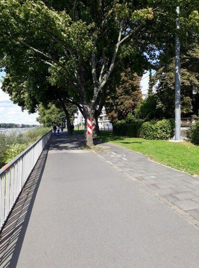 Königswinter Rheinpromenade: Für viele Radwege an Bundeswasserstraßen wie dem Rhein ist übrigens die Wasserstraßen- und Schifffahrtsverwaltung des Bundes zuständig. Das kann dann auch mal so aussehen wie hier. Grüne Politik für den Radverkehr im Bund könnte das ändern.