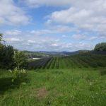 Wachtberg - Niederbachem: Angekommen in der Obstbauregion
